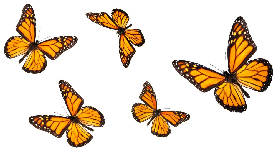 Reframing the Butterflies: How to Feel Calm and Confident